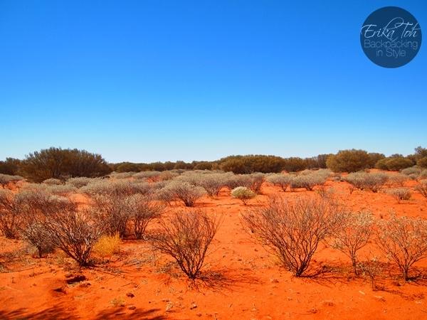 Aboriginal Guided Tours Uluru