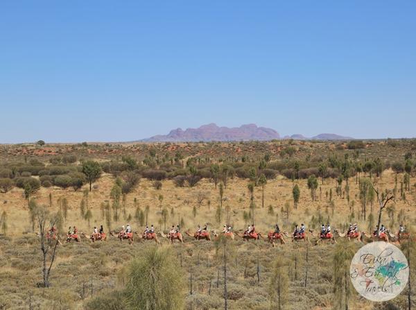 ErikaEvaTohTravels-Uluru-Camel-Ride-Camel-Express-1-Ayers-Rock-Australia-17