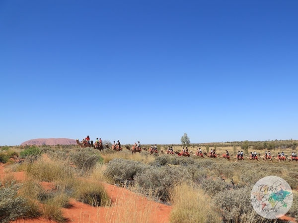 ErikaEvaTohTravels-Uluru-Camel-Ride-Camel-Express-1-Ayers-Rock-Australia-18