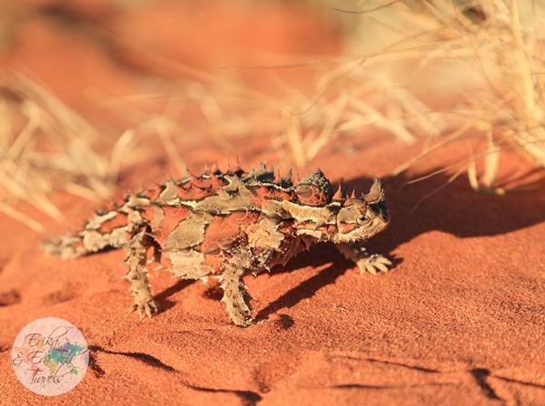 ErikaEvaTohTravels-Uluru-Camel-Ride-Camel-Express-1-Ayers-Rock-Australia-20