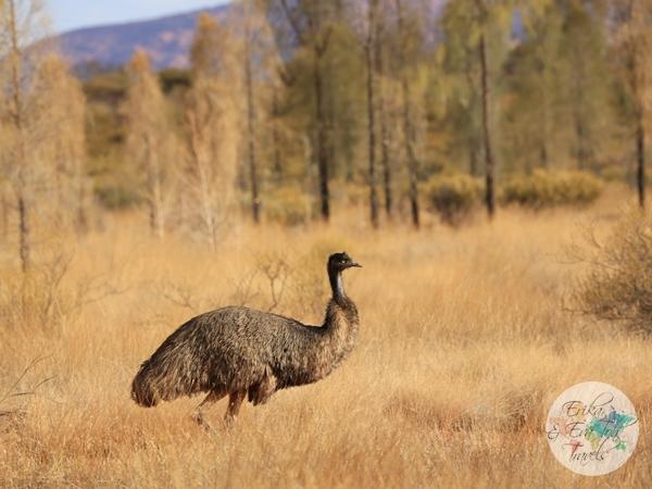 ErikaEvaTohTravels-Uluru-Camel-Ride-Camel-Express-1-Ayers-Rock-Australia-23