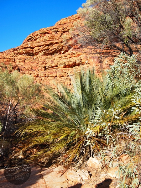 ErikaTohTravels-Backpacking-In-Style-Cycads-Kings-Canyon-Rim-Walk-Red-Centre-Australia-1