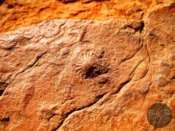 ErikaTohTravels-Backpacking-In-Style-Jellyfish-Fossil-Kings-Canyon-Rim-Walk-Red-Centre-Australia-1