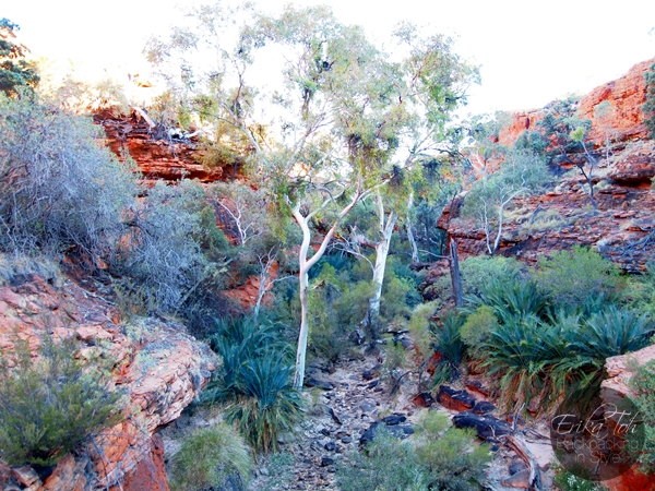 ErikaTohTravels-Backpacking-In-Style-The-Garden-of-Eden-Kings-Canyon-Rim-Walk-Red-Centre-Australia-13