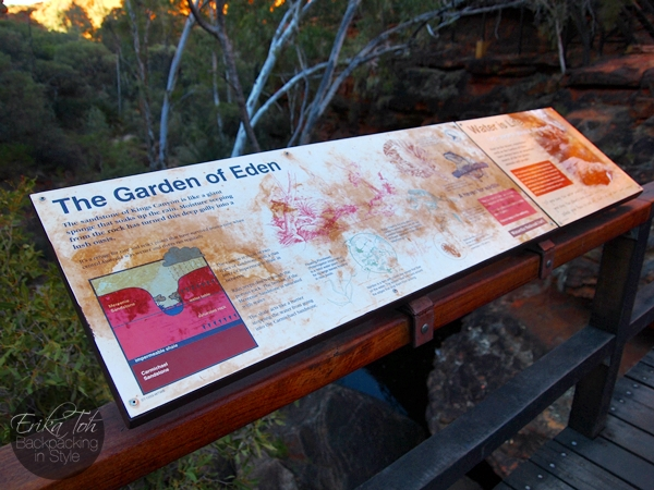 ErikaTohTravels-Backpacking-In-Style-The-Garden-of-Eden-Kings-Canyon-Rim-Walk-Red-Centre-Australia-14